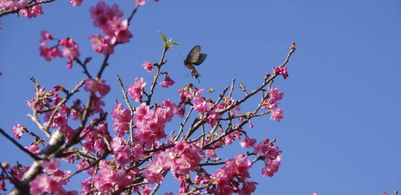 春の祈祷週!